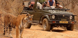 Ranthambore-National-park-3